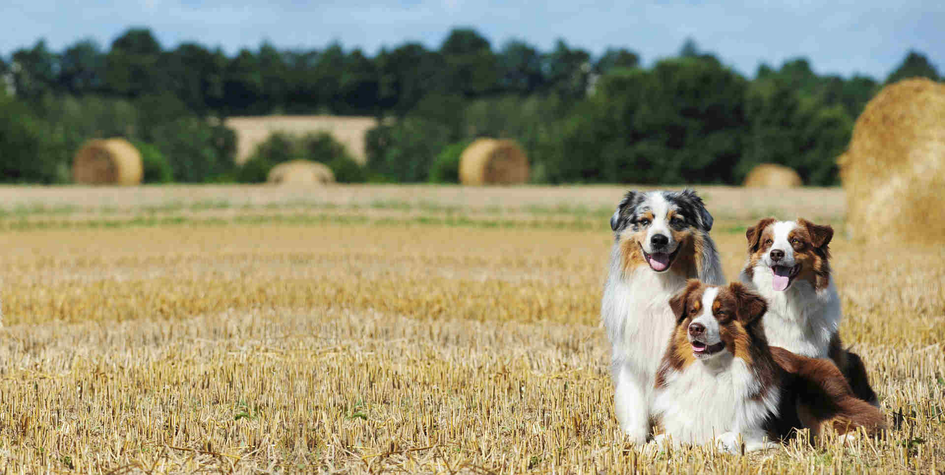 Top Tips for Travelling with Pets on family holidays